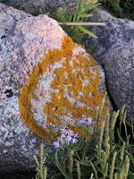 En sådan här sten ligger på stranden i närheten. Någon har för länge sedan huggit ett hjärta med initialer på stenen och sedan har färgglada lavar dekorerat det hela!