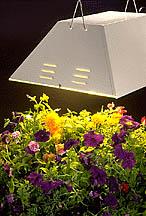 En speciell växtbelysning är den bästa lösningen.