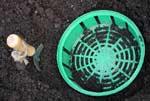 Om du vill kunna lyfta bort de utblommade lökarna så är en lökkorg till bra hjälp. Se till att korgen ligger tätt mot det iordningställda underlaget, så att inga luftspalter bildas under den.