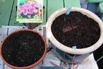 Om du har lökar för drivning, kan du även använda icke-frosttåliga krukor, då dessa krukor ju inte skall stå ute under vintern utan i ett frostfritt utrymme.