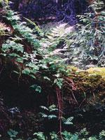 Svenskarna värdesätter klimat, luft och skog