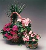 Lilla och Lyckliga Lotta med ett överdåd av blommor