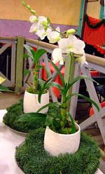 Små vita orkidéer