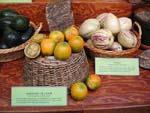 Pepino, Solanum muricatum och Naranjilla, Solanum quitoense. På bilden ses även den välkända avokadon.
