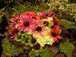 Nya sorter av solhattar, Värö trädgård