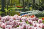 Linné hyllas i den berömda lökparken Keukenhof