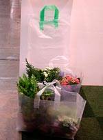 Polyplant-plantkassar