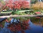 Prunus sargentii 'Rosensky' speglar sig