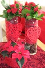 Röd Jul med kalankoe och julstjärna