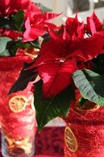 Röd Jul med julstjärna