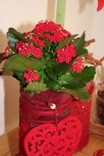 Skapa en röd jul med kalankoe