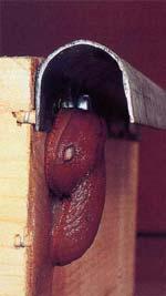 Med lite händighet kan man själv ordna elektriska eller mekaniska hinder som får sniglarna att vända om.