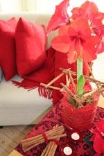 Skapa en röd jul med amaryllis