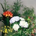 Blanda gärna vårens krukväxter. Blommande och gröna växter matchar varandra.