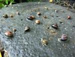 Skulle sätta trampplattor så satt det massor med snäckor under plattan! Och alla är olika!