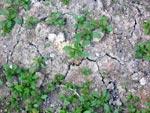 Vid slagregn kan strukturen förstöras och det bildas skorpa. De små kokorna har i vissmån bevarat strukturen. Det bildas sprickor då jorden torkar ut. Då förs syre ner i marken till rötterna.