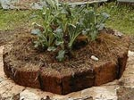 Torvblocksrabatten nyplanterad med svartkål