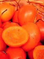 Trädtomat eller tamarillo, Solanum betaceum