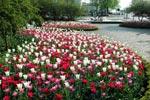 Äntligen är det dags för massor med tulpaner och andra vårblommor!