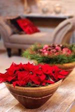 En bordsdekoration med röda julstjärnor visar stolt upp en personlig stil. Plantera stjärnorna tätt i en vacker kruka. Matcha med vintergröna kvistar och personligt julpynt.