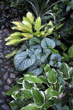 Vackra bladfärger och -former