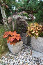 Två varianter på palettblad tillsammans med olika gräs och sommarblommor.