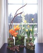 De gula blommorna får symbolisera vårsolen. De gröna glasvaserna ger en vision om kommande grönska.