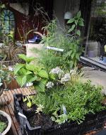 Växter i väntan på plantering