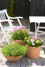 krukträdgård