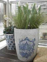 Man kan göra balkongen till en njutbar oas även på senvintern. I den största krukan har det planterats tulpanen som heter 'Snow Lady' tillsammans med gräs (Carex brunnea) och i krukan bredvid den vita julrosen Helleborus niger.
