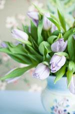 Alla hjärtans lila tulpaner