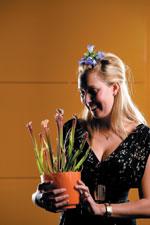 Venusflugfälla, Dionaea muscipula