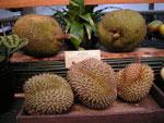 Durian med jackfrukt bakom