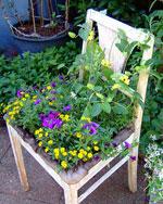 Kryddkrukor och en gammal stol som planteringskärl