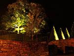 Muren med belysta träd