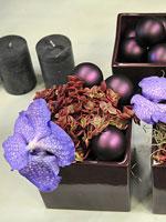 Här ses två fyrkantiga, purpurfärgade krukor med en likaså purpurfärgad Sedum-sort, samt en enda blomma av orkidén Vanda 'Blue Magic'.