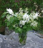 Syrenvas med vita liljetulpaner