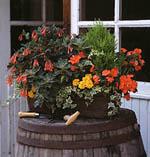 Här en balkonglåda med växter för det