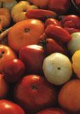 Bland annat handlar en artikel om tomatodling och lämpliga recept att använda när man skördat sina tomater.