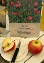 Andreassons. Äpple 'Rubin' från Kazakstan