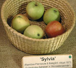 Äpple 'Sylvia'