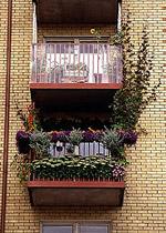 Klängväxter på balkongens väggar förvandlar den till ett grönt rum mitt i stan.