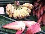 Banan, unga hanblommor, minibanan, röd banan