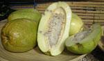 Jättegrenadill, barbadin, Passiflora quandrangularis