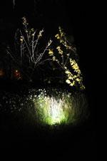 Belyst gräs och träd