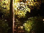 Belysta träd och buskar