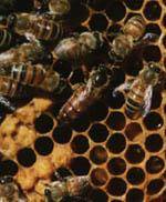 Genom sitt i många stycken totala beroende av varandra, är blommor och bin intimt sammankopplade.