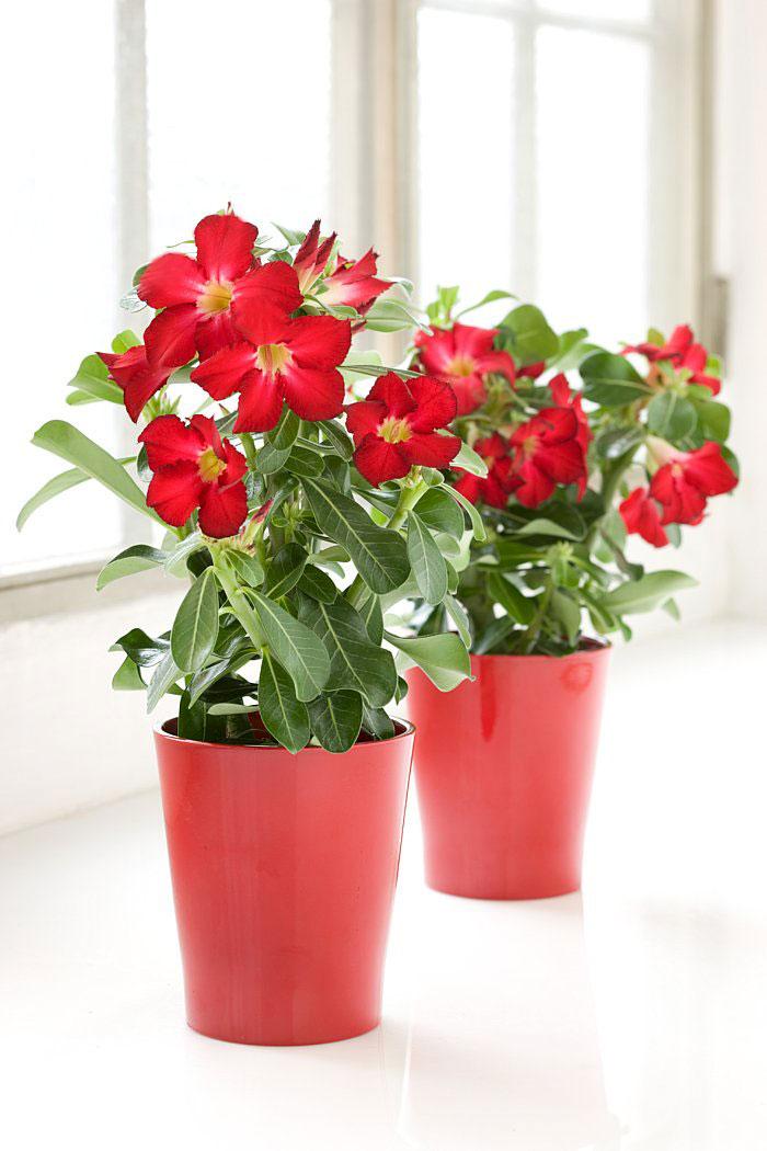 blommor som tål sol inomhus