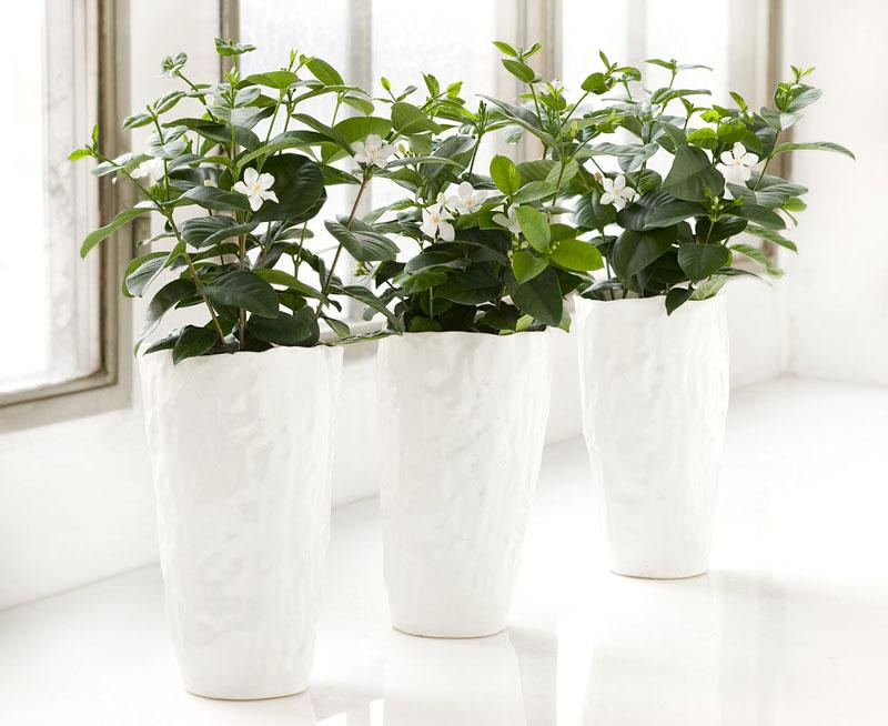 gröna växter som tål sol
