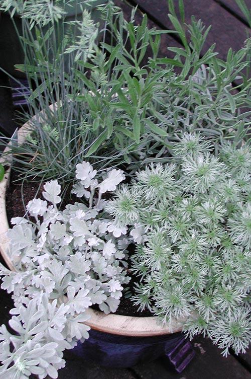Vinterförvaring av växter | Odla.nu